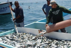 Impulsan En Baja California Programa Global De Manejo Pesquero