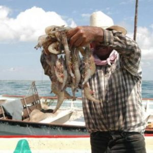 Inicia Temporada Para Captura De Camarón En El Océano Pacífico