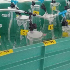 Buscan A Bacterias Biorremediadoras En México