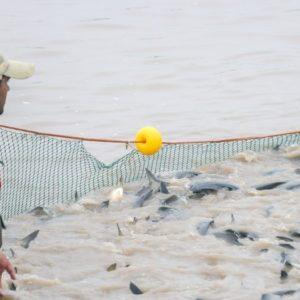 Acuicultura: Se Reglamentó La Ley Para El Fomento De La Actividad