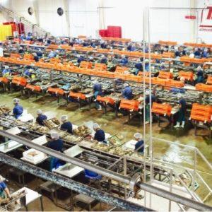 Esta Empresa Mexicana Fue Reconocida Por Su Pesca Sustentable