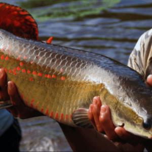 Hay Oportunidad Para La Inversión Privada En Sector Acuicultura De Perú