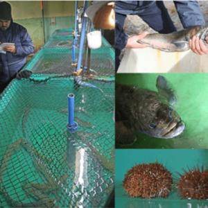 Recuperación De Especies Y Producción Exportable Desarrolla Centro De Investigación En Acuicultura Laredo En Chile