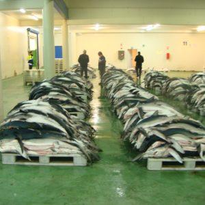 ¿Cómo Producir 27 Millones De Toneladas De Pescados Y Mariscos Anuales Al 2030?