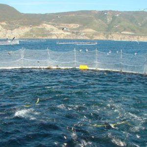 El Potencial De La Maricultura