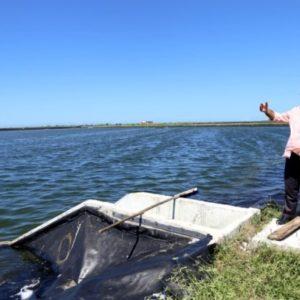 Yucatán, México, Idóneo Para La Acuacultura