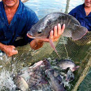 Desembarques De Pesca Extractiva Y Acuícola Aumentan 16% A Agosto