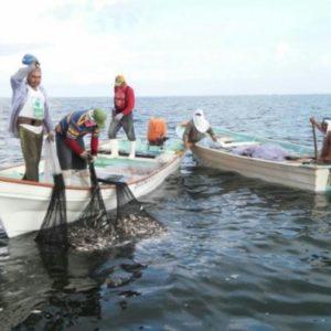 Comisión Avala Que SENASICA Coadyuve En Inspección Y Vigilancia Del Traslado De Todo Producto Pesquero