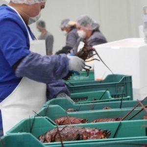Buscan Certificar A Exportadores En México