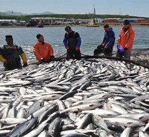 La OCDE Reclama En Un Estudio Mejoras Para El Control De La Pesca