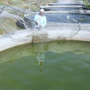 Iniciativa Busca Crear Nueva Ley De Acuicultura Y Pesca De San Luis Potosí En México