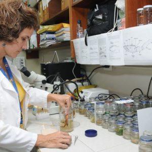 Científicos Mexicanos Examinan Efecto De Dietas En La Salud De Los Organismos