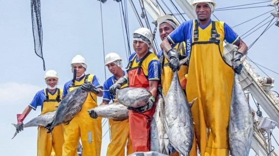 Produce Responde A Conserveras Por Abastecimiento De Atún En Perú