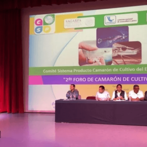 Piden Mejorar Sustentabilidad De La Acuacultura De Camarón En México