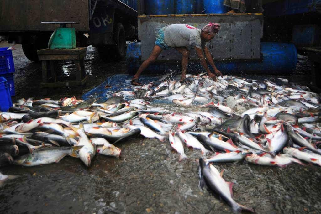 Pesca Sostenible America Latina Caribe FAO