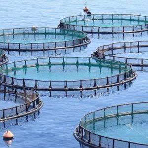 La Junta Apoya Once Proyectos De Acuicultura Marina Con 8,3 Millones De Euros