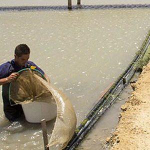 La Junta Apoya Once Proyectos De Acuicultura Marina Con 8,3 Millones En España