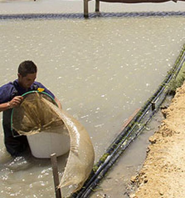 La Junta Apoya Once Proyectos De Acuicultura Marina Con 83 Millones