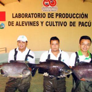 Quieren Fortalecer La Cría De Peces En Paraguay