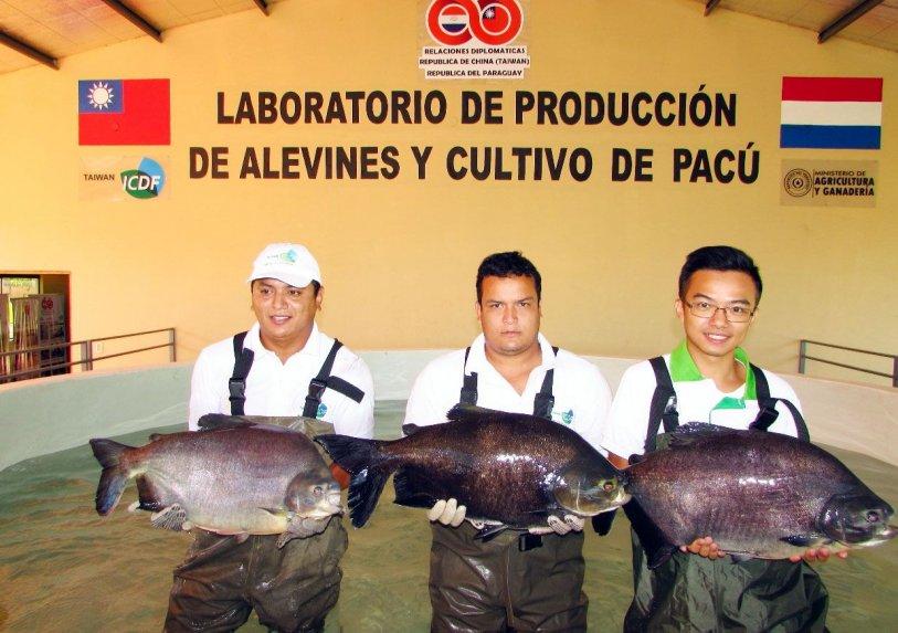 Quieren fortalecer la cr a de peces en paraguay panorama for Cria de peces en cautiverio