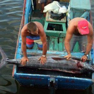 Buscan Aumentar Producción De Peces Con Mejoras Genéticas En Cuba