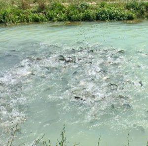 Apromar Pide Al Gobierno Que La Producción Acuícola Se Equipare Al Regadío Agrícola En El Uso Del Agua