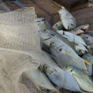 Chile Crea Instituto Sustentable De La Pesca Artesanal Y La Acuicultura De Pequeña Escala