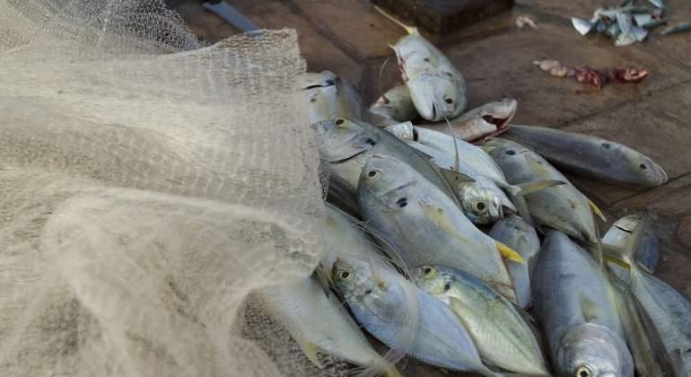 Pesca.notimex