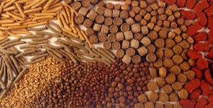 La UCA Investiga En Nuevos Piensos Para Acuicultura