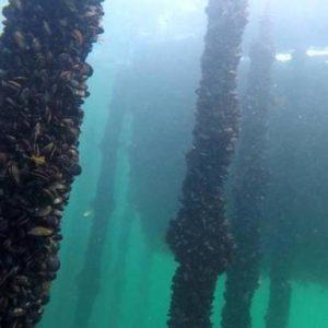 Autorizan El Cultivo De Mejillón En Mar Abierto Entre Ondarroa Y Lekeitio