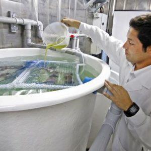 Resaltan Aporte De La CITE Acuícola De Talara En Desarrollo De Sector