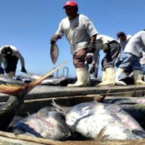 Sector Pesquero De Jalisco Avanza En Innovación De Sus Equipos