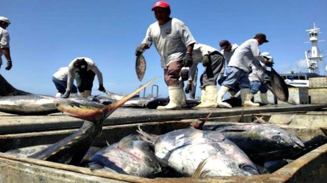 A La Alza El Sector Pesquero Y Acuícola De Jalisco 2