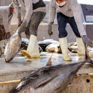 Alcanza Producción Pesquera Y Acuícola Nacional Las 1.8 Millones De Toneladas En México