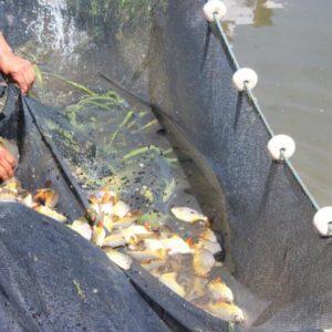 Fomentan El Desarrollo De La Piscicultura Para Reutilizar El Agua Termal En Argentina