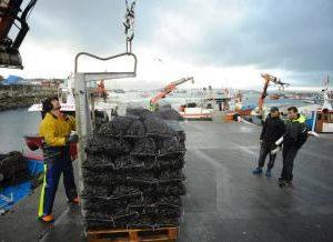 Galicia Se Consolida Como Potencia Mundial Acuícola Tras Vender 267.000 Toneladas De Mejillón En 2017