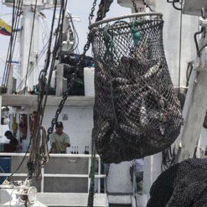 Ecuador Es El Segundo Productor De Atún En El Mundo, Después De Tailandia
