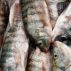 Fortalecerán Mipymes De La Cadena De Pesca En Honduras