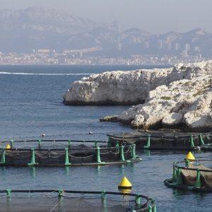 El Gobierno Canario Aprueba El Plan Regional De Ordenación De La Acuicultura
