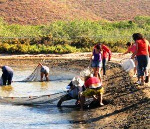 Destaca Investigadora De La UABCS Importancia De La Acuicultura En México