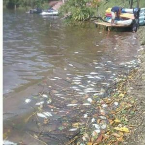 SANIPES Informará Sobre El Virus De La Tilapia Lacustre En San Martín, Perú