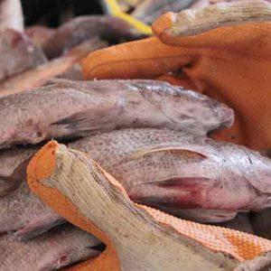 Sector Pesca Y Acuicultura Ha Producido 16,7 Millones De Kilos En 2018 En Venezuela