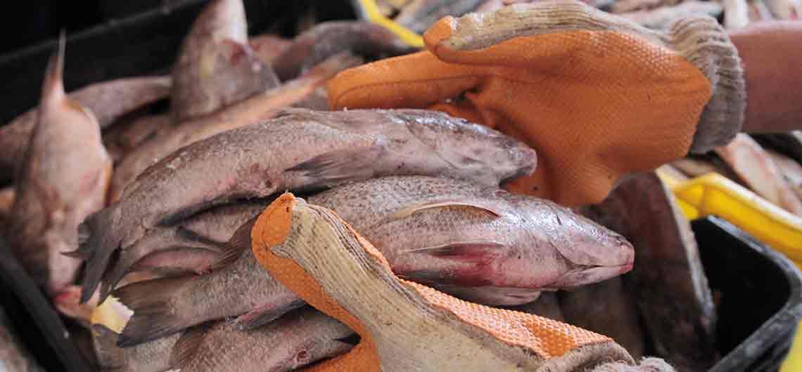 Mega Feria Socialista Del Pescado Y Caravana De La Sardina