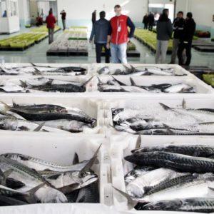 España Ya Ha Consumido Toda Su Pesca Y Pasaría A Depender De La Importación