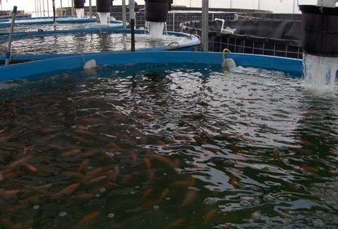 Granja Acuaponia Recirculacion Agua Desperdicio MILIMA20140520 0036 11