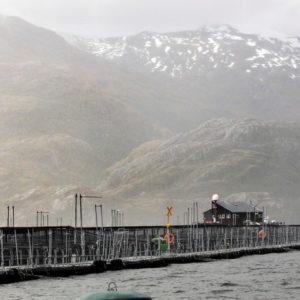 Aprueban Instalar Salmoneras En El Mar Argentino: Debate Por El Daño Ambiental