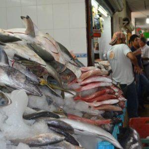 Expertos De La UNAM Participarán En Mejora De Pesquerías Comerciales En Tamaulipas