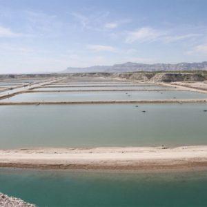 Baja California Sur Tiene Potencial Para Desarrollar Actividades De Acuacultura: Sepada