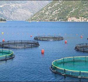 La UPO Crea CEPA, Una 'spin-off' De Acuicultura Sostenible Para El Alimento De Peces En España