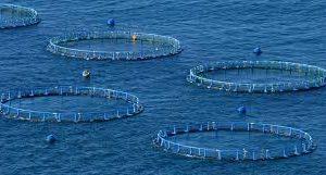 Mercado De Acuicultura Mundial Agua Marina Registran Alta Demanda En 2018-2025